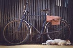 An old bike and a sleeping dog next to a wooden fence